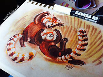Red Pandas Playing by KatCardy