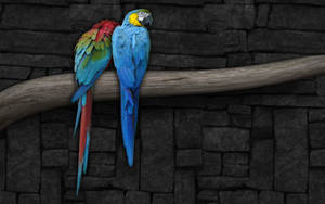 Parrots Widescreen by Sed-rah