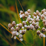 Flower 8.0
