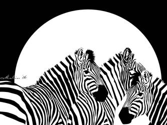 Zebras by M-Willander