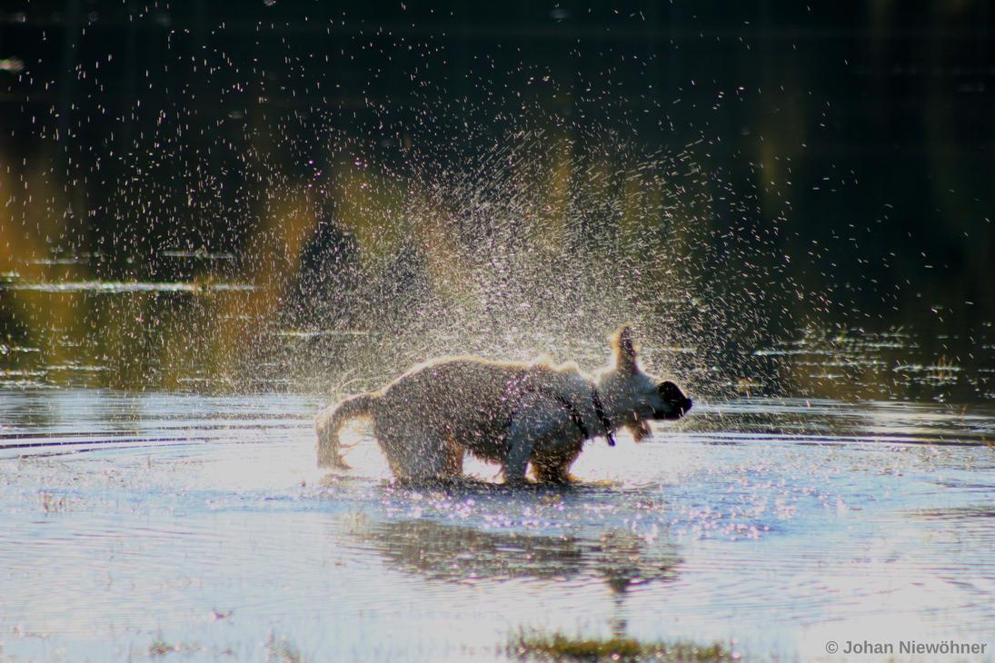 All wet by jochniew