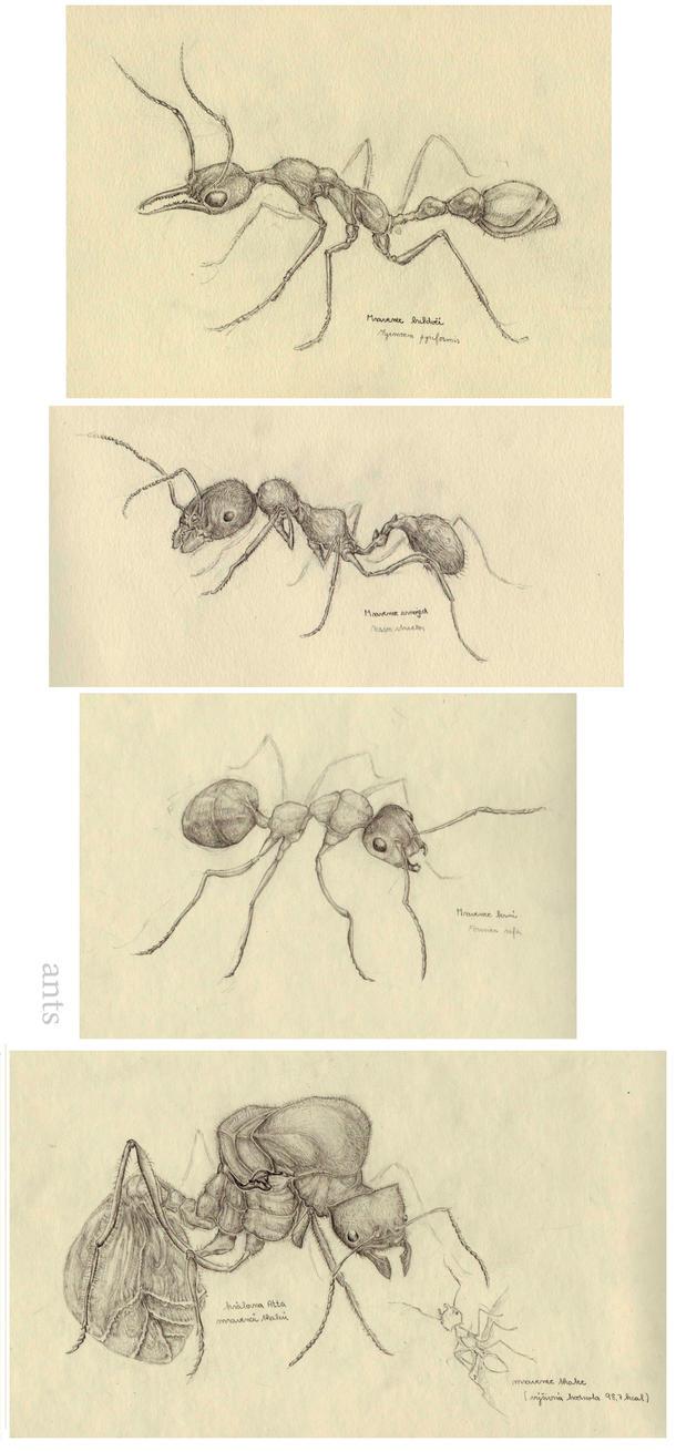 Ants by 8Ryuu8