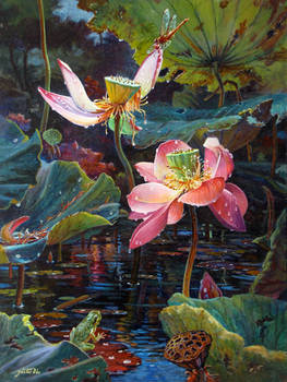 Lotus Pond After Rain