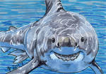 Birthdays December 2017 - Have A Shark