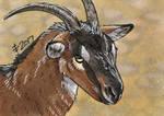 Birthdays December 2017 - Have A Goat