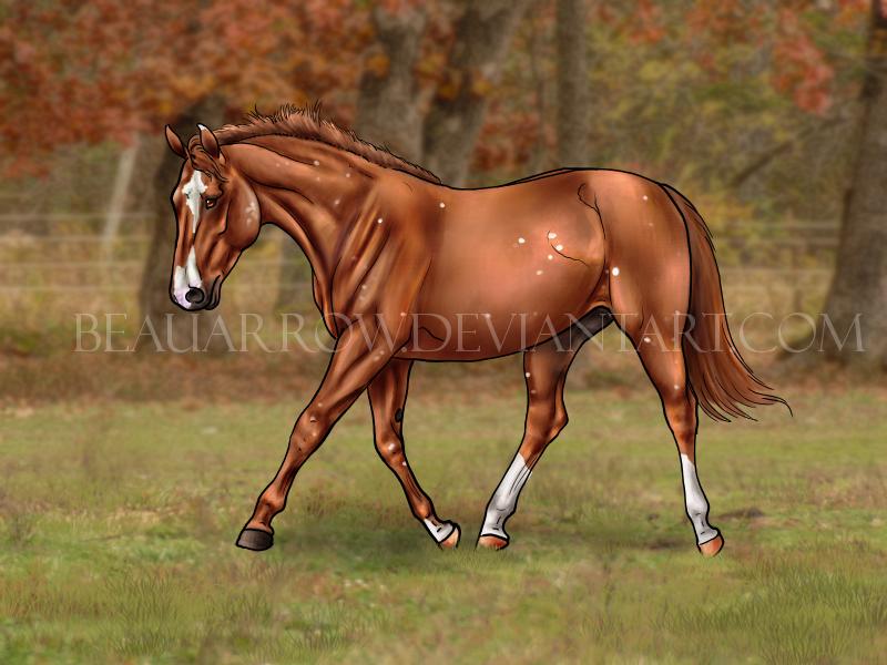 Irish Spot Horse by BeauArrow