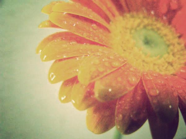 flower 1 by xArtIronx