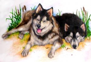 Commission-Huskies