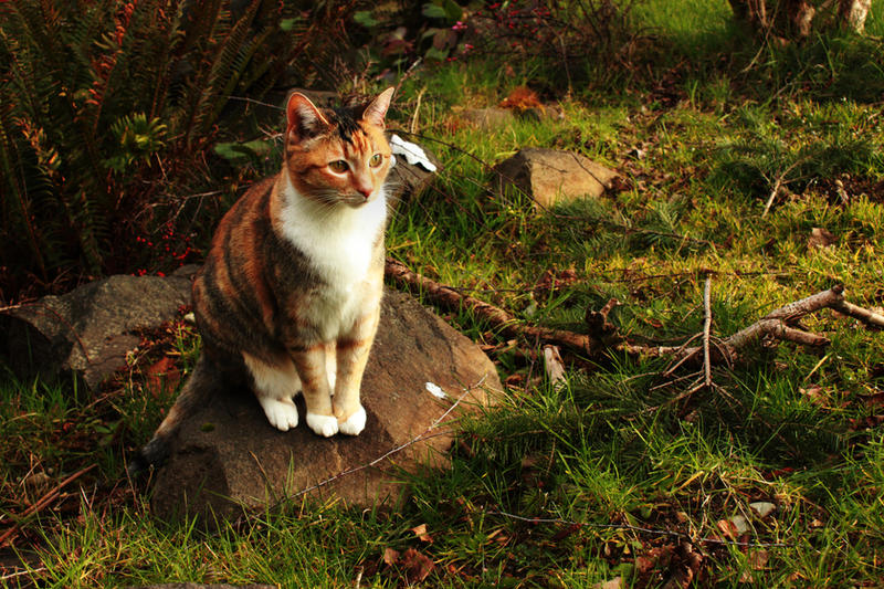 http://fc00.deviantart.net/fs71/i/2011/070/8/f/judgmental_cat_by_remanere-d3bfum3.jpg