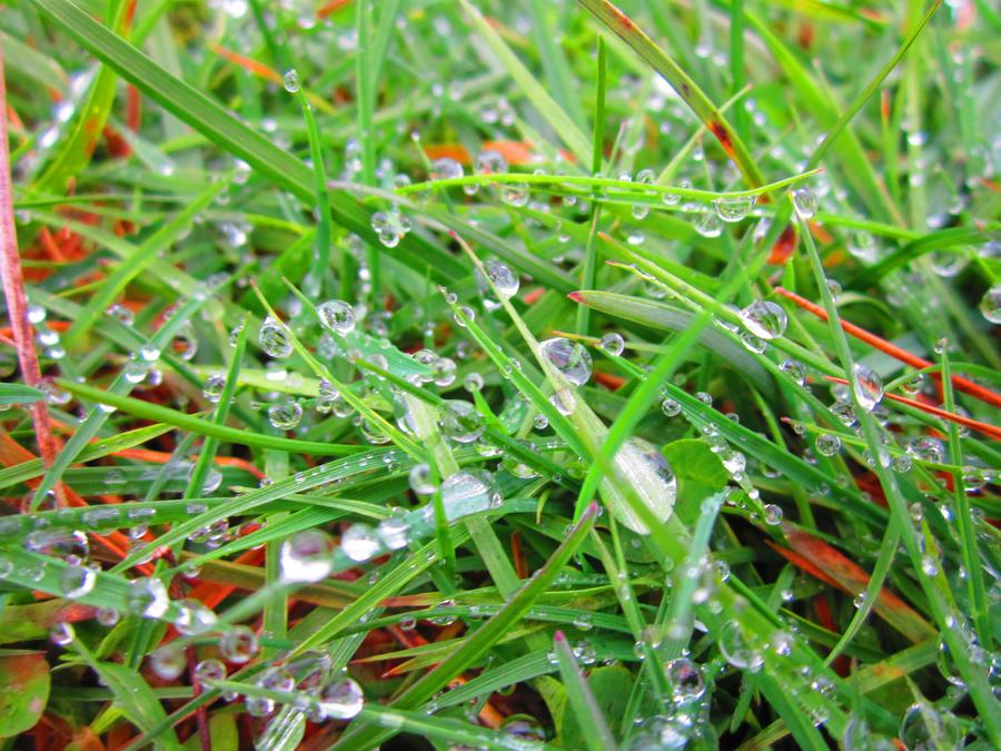 dewdrops by xoSoul