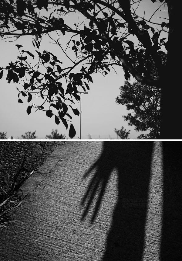film noir. by sweet-leaf