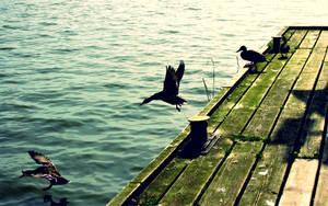 Stop-Motion Ducks Wallpaper by 4rch0n