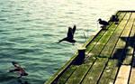 Stop-Motion Ducks Wallpaper