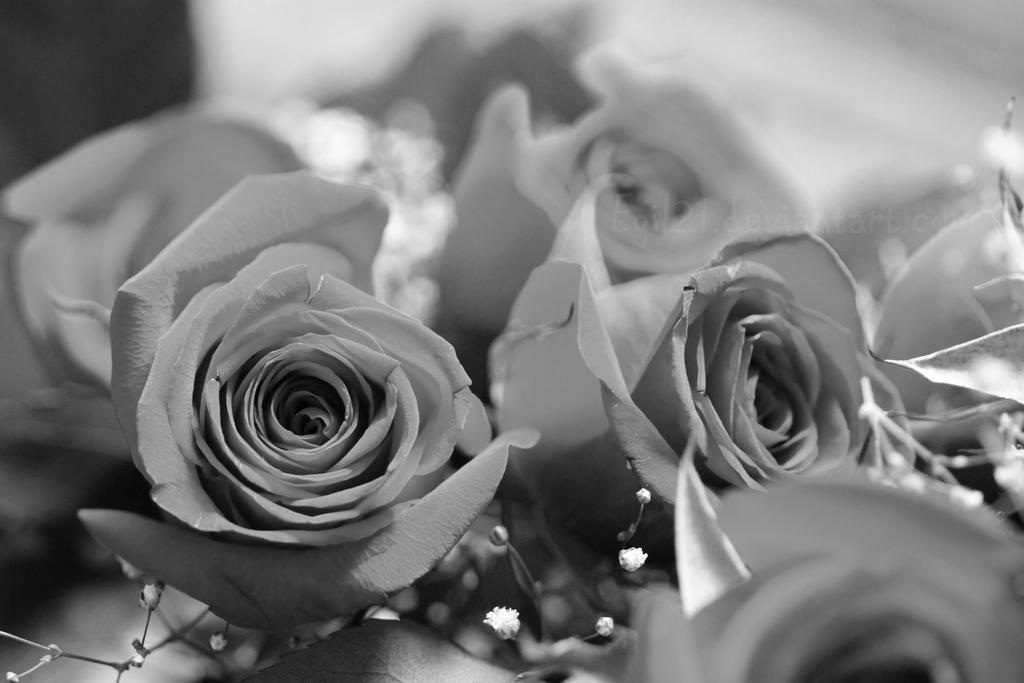 My Summer - Flowers by Egil21