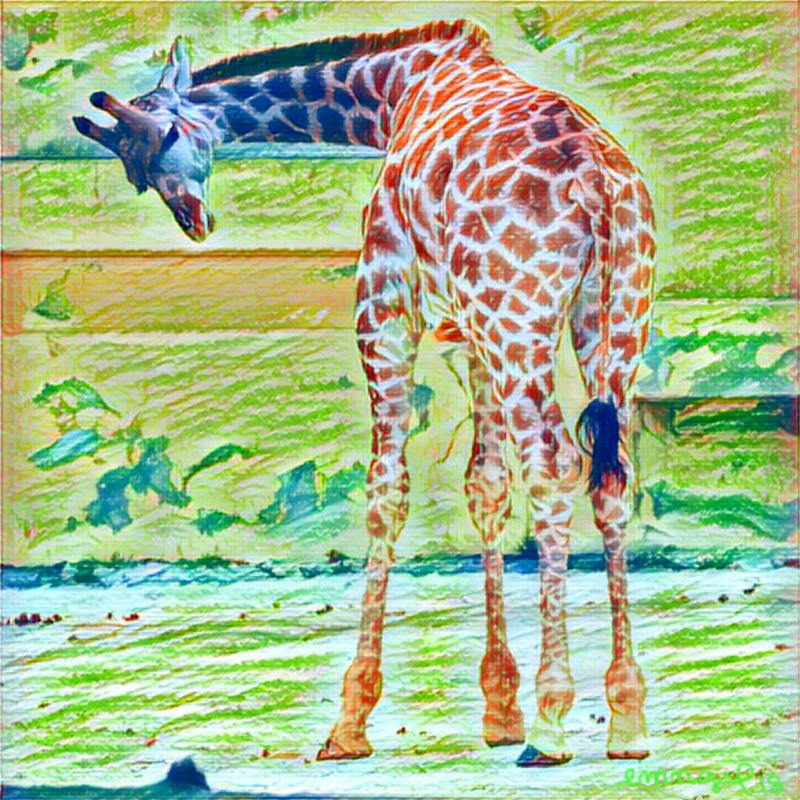 Animalia - Girafa