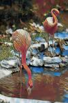 Animalia_Flamingo