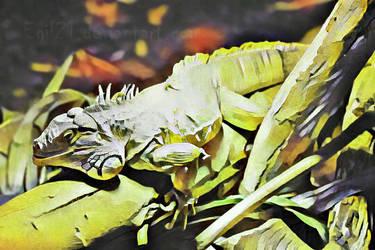 Animalia_Iguana