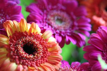 Colourful Flowers by Egil21