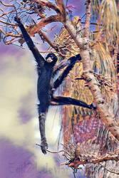 Animalia_Macaco-aranha-da-colombia