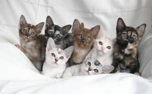 Kittens by Kazy-Fandango