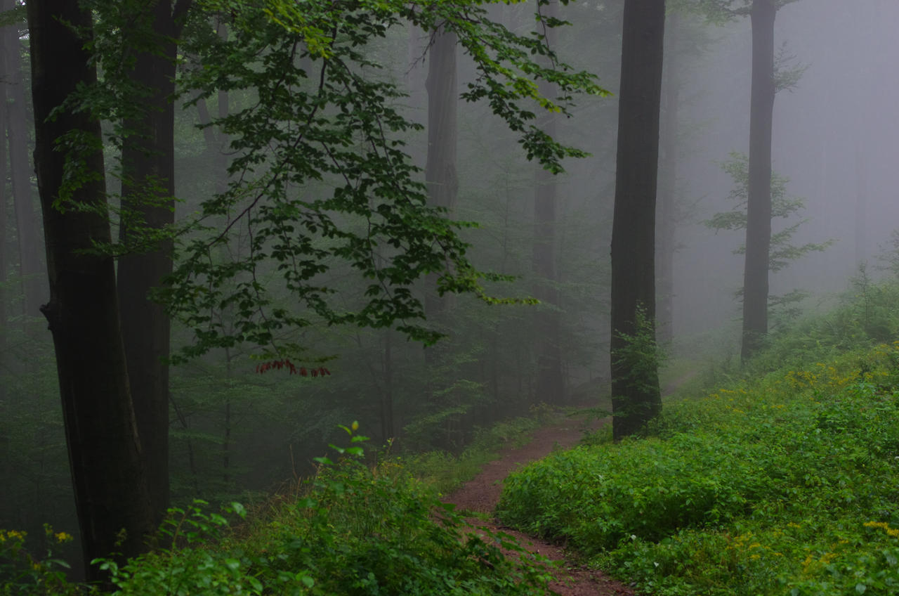 foggy forest by a - photo #25