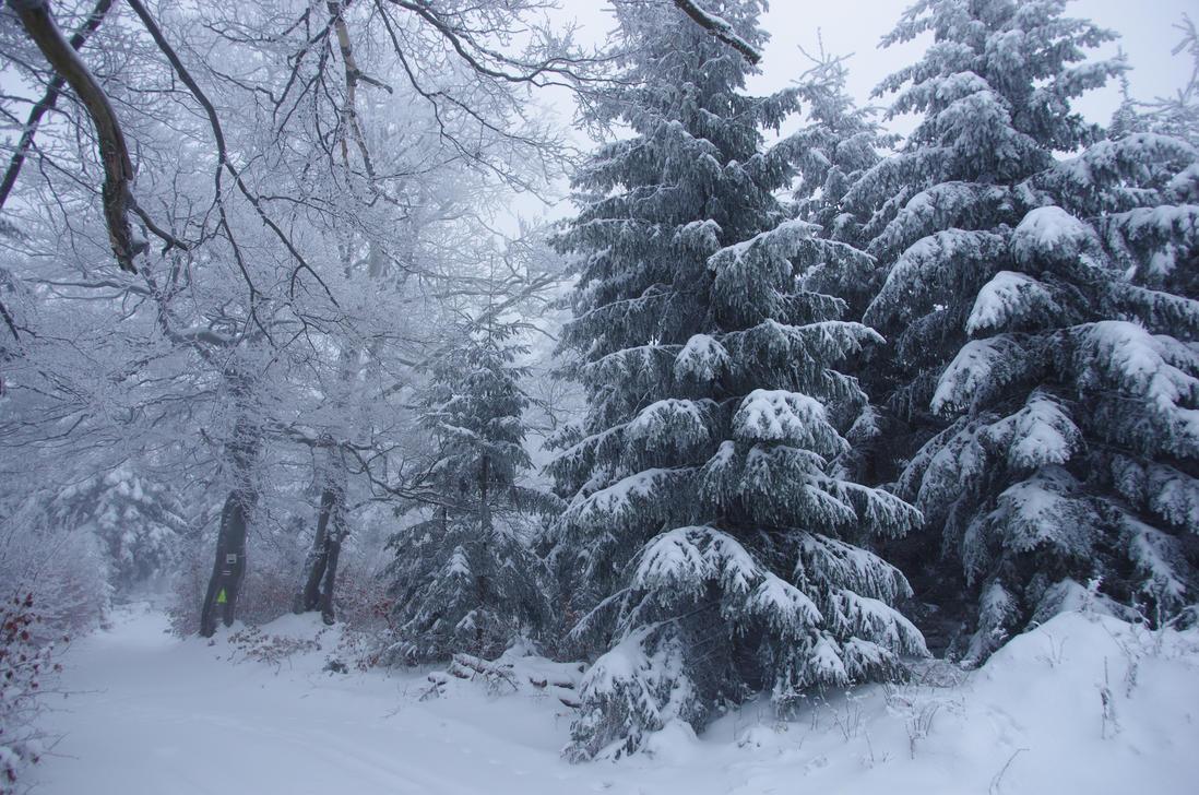 Forest by a-kwiatkowski