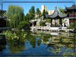 Chinese Garden- Summer