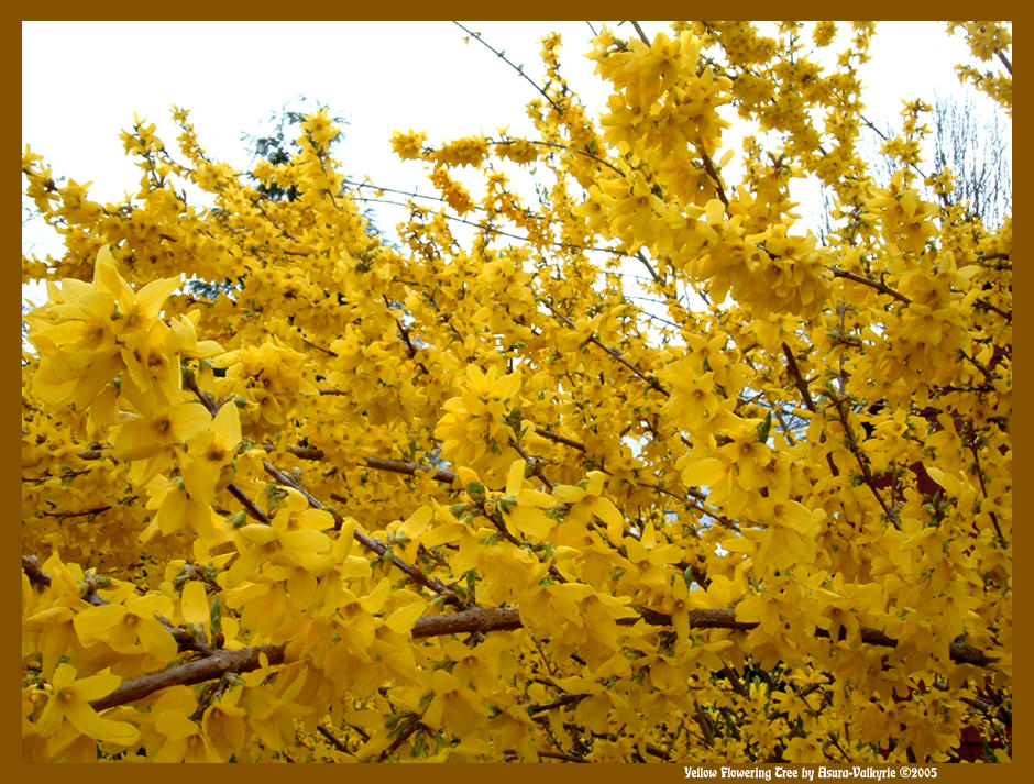 Yellow flowering tree by asura valkyrie on deviantart yellow flowering tree by asura valkyrie mightylinksfo Image collections