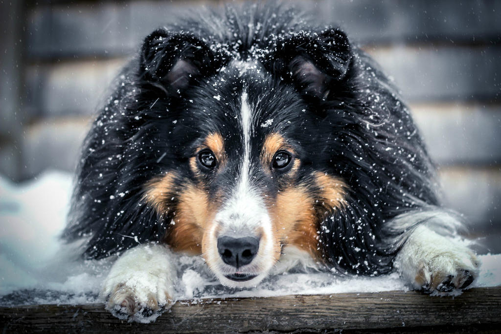 Snow Eyes by UnstoppableDogs