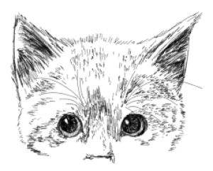 trifoliumBLUE's Profile Picture