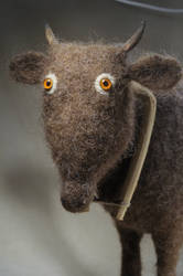 sacred cow closeup by vriad-lee