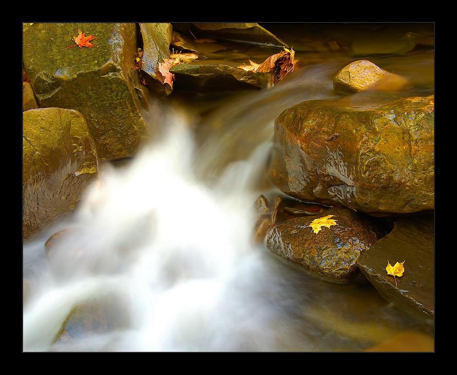 Rynex Creek by AlienShore