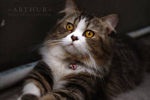 Bright Eyes by ticuk