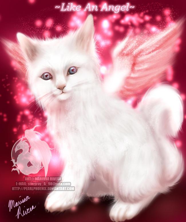 http://fc63.deviantart.com/fs11/i/2006/207/7/5/Angel_Kitten_by_PearlPhoenix.jpg