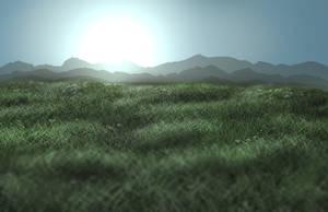 First Landscape Grass Field 2016