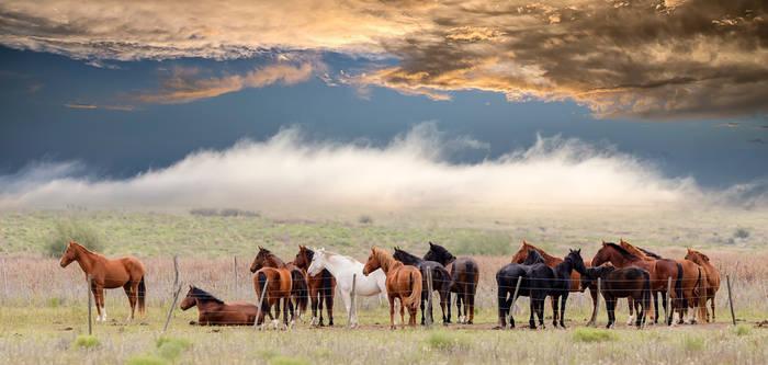 Caballos/horses