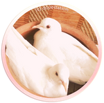 My Doves by DoveStation