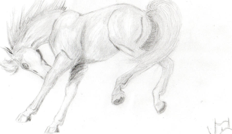 bucking horse drawing by crazycowgirl4108