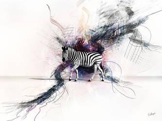 Zebra by HetRegent