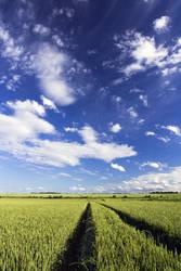 Field by holda29