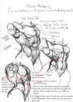 anatomy: torso by Jebriodo
