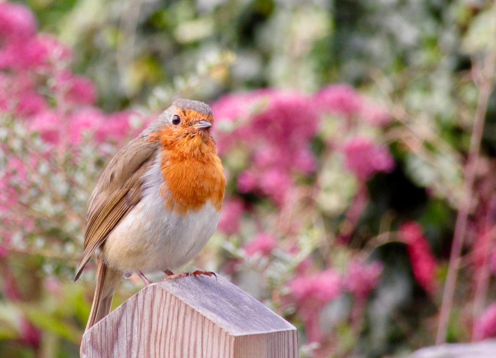 bird by phil-child