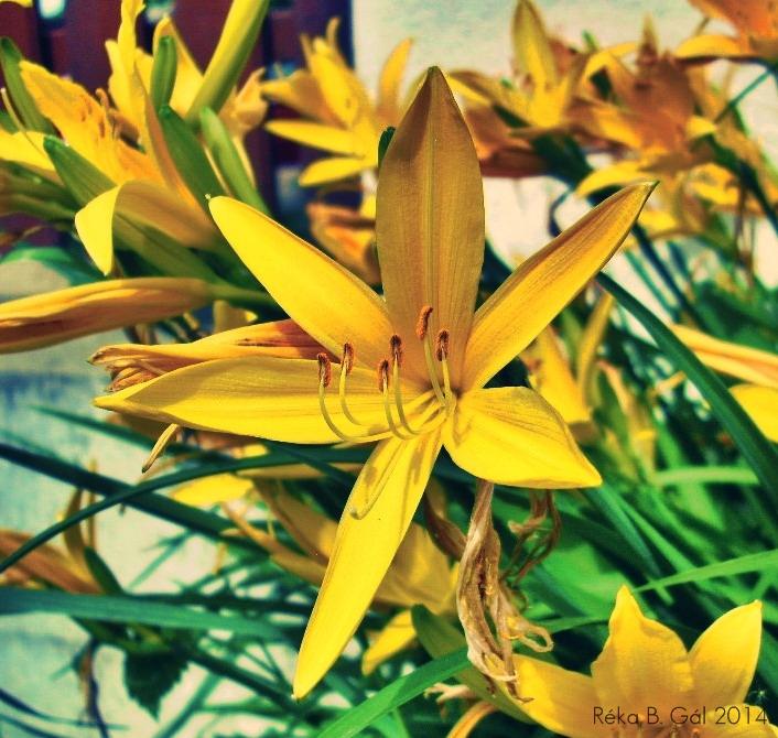 Yellow by ReBri