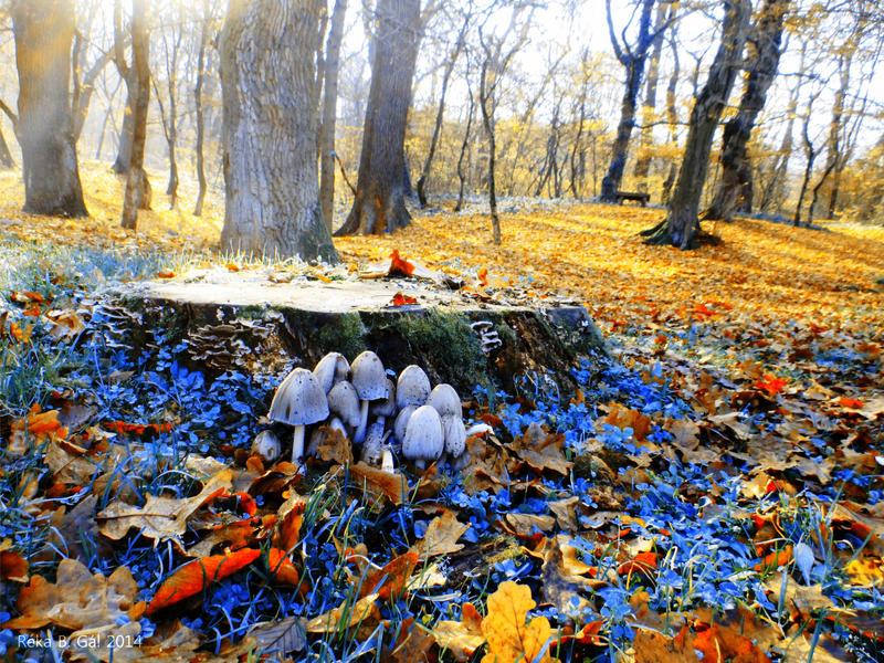 Bluish Autumn by ReBri