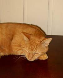 I Can Sleep Anywhere by Citrus-Chickadee