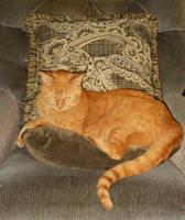 Royal Kitty by Citrus-Chickadee