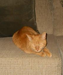 Luxurious Kitty
