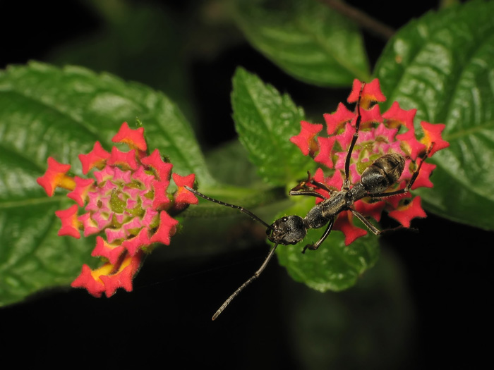 ant and flowers