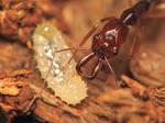 ant family 2