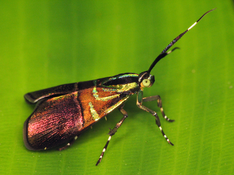 dorky moth prince 2